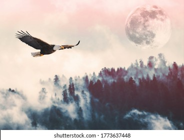 Animals - Big american bald eagle flying (left to right). It is isolated on a background with a mountain and green trees from forest. Sunset and moon. Freedom concept. Alaska (Kenai Mountains)
