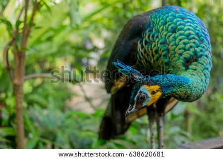 Animals Birds National Park Beautiful Birds Stock Photo Edit Now
