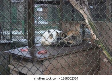 animals in captivity.