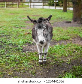 Animals in captivity. Donkey live in their aviary in an outdoor zoo in Russia