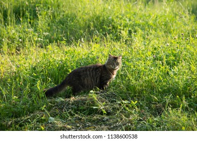 ANIMALS - the cat in the grass