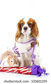 Animals celebrate new year's eve. Bunny lop and king charles dog in studio. Rabbit with dog sylvester illustration. Happy new year! Cavalier king charles spaniel and Wo color rabbit.