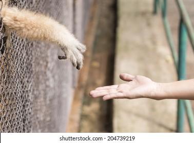 animals confined vs freedom