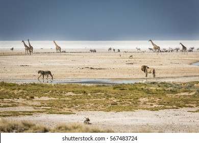 Animals gather around a water hole at the salt pans in a wildlife reserve in Namibia.