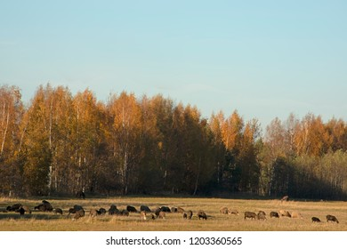 ANIMALS - herd of sheep in sunny day of fall