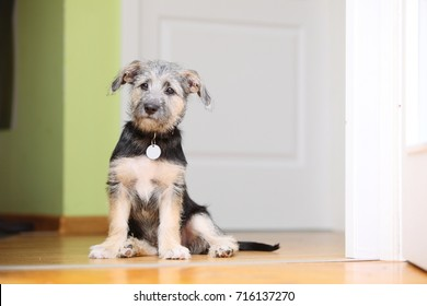 Animals at home - dog cute mutt puppy pet sitting on floor indoor