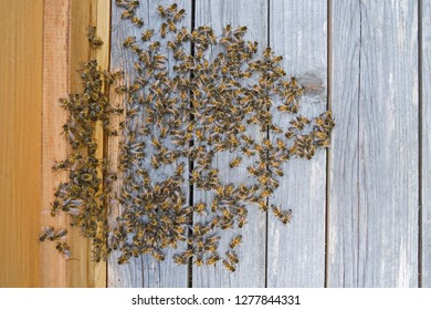 Animals: Honeybees in front of the entrance to their wooden hive