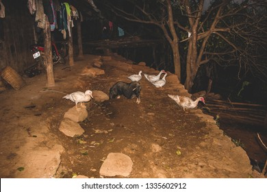 Animals in a house of a village in Na Phac, Bac Kan, Vietnam