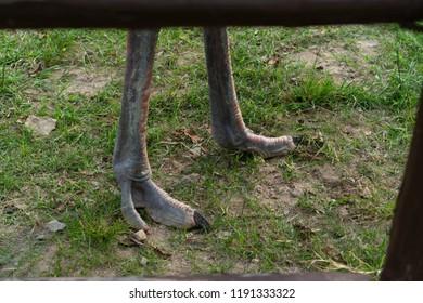 Animals leg ostrich