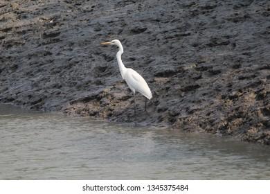 Animals and nature in and around sundarban national park