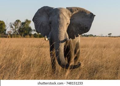 Animals of the Okavango Delta in Botswana Africa