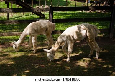 Animals on the farm outdoors