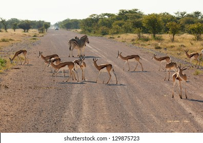 A lot of animals pass through the road. Africa. Namibia.
