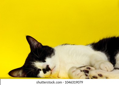 Animals, Pets Concept.Tuxedo Cat Sleeping. Black Cat Relaxing. Black Cat on Yellow Background.