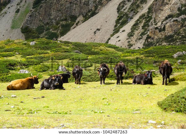 animals relaxing on a green grassed patch
