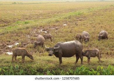 Animals in the rice fields