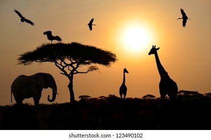 Animals silhouettes standing over sunset on safari in Africa. Elephant, Giraffes, Birds