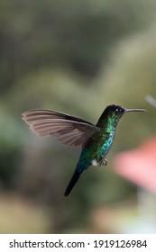 Animals (Sloth, Frog, Hummingbird) in Costa Rica