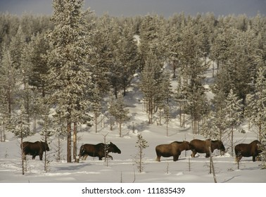 Animals walking in snow covered forest