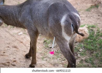 Animals were shot doping