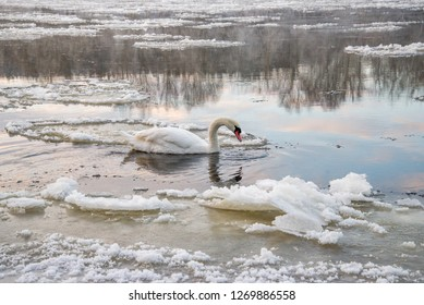 Animals in winter by the river in Belarus