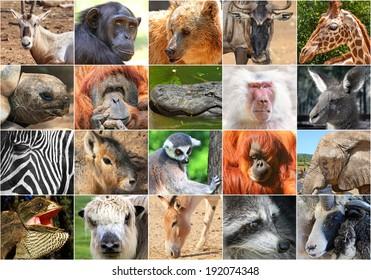 Wildlife Collage With Panda Animals World