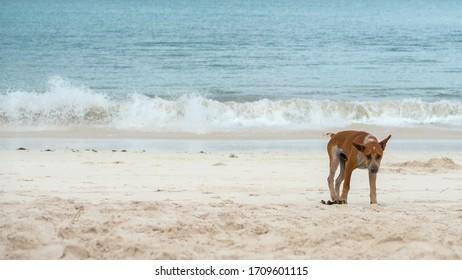Anjing bermain di Pantai Tanjung Aan, Lombok