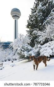 ANKARA, TURKEY - DECEMBER 25, 2017: Atakule and Botanic Park in snow. Atakule is one one of the primary landmarks of Ankara. - Turkey