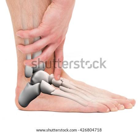 Ankle Bones Anatomy Male Stock Photo Edit Now 426804718 Shutterstock