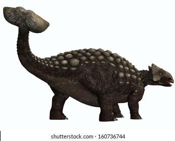 Ankylosaurus on White - Ankylosaurus was a heavily armored herbivore dinosaur from the Cretaceous Period.