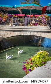 Annecy, France - July 2019 : Two swans passing under a bridge in Annecy during the weekend market