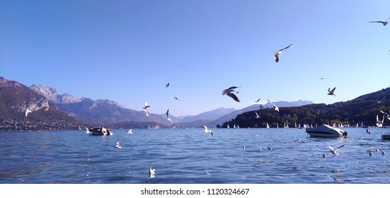 Annecy lake in the mountains with flying birds