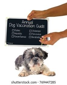 Annual Dog Vaccination Guide (Rabies, Hepatitis, Parainfluenza, Distemper, Parvovirus, Bordetella) Blackboard Sign  Hand giving shot to dog white background