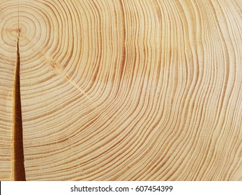 Annual rings; growth ring
