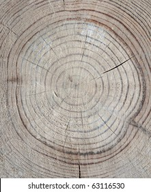 Annual rings in old wood