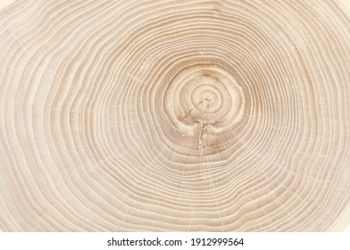 annual rings on a tree cut close-up