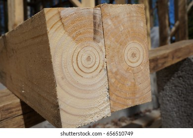 Annual Rings in Timber