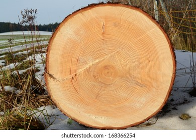 annual rings (tree)