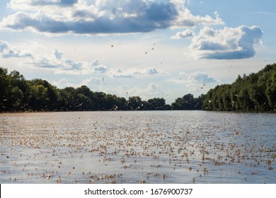 Annual swarm of long-tailed mayfly on Tisza river in Serbia