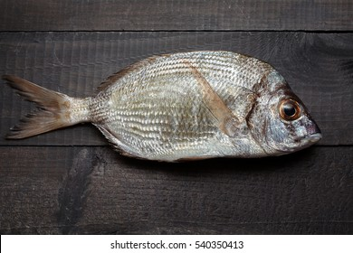 Annular sea bream (Diplodus annularis) on black wooden surface