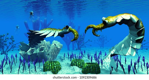Anomalocaris in Cambrian Seas 3D illustration - Two predatory Anomalocaris invertebrates have a dispute over territorial rights over an ocean reef in Cambrian Seas.