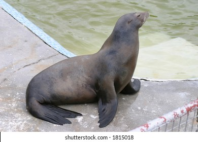 Another image of the Posh seal from the Seal Sanctuary in Cornwall.