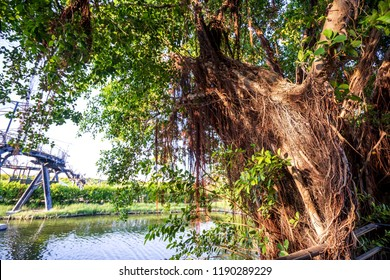 """The Anping Tree House  is a former warehouse in Anping District, Tainan, Taiwan. The """"treehouse"""" name refers to the living banyan roots and branches that cover the building."""