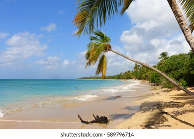 the anse de salines beach, martinique, caribbean