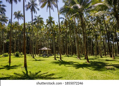 Anse des Cascades palm and coconut trees in Sainte-Rose on Reunion Island
