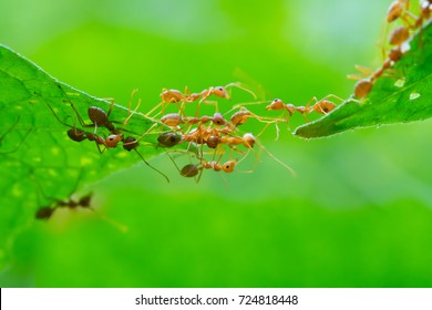 Ant action standing.Ant bridge unity team