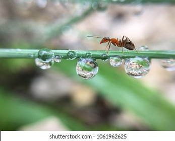 Ant after rain with amazing colors