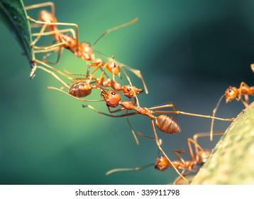 Ant bridge unity