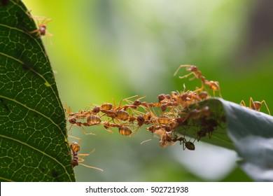Ant bridge unity team