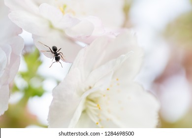 ant climbing from blossom to blossom